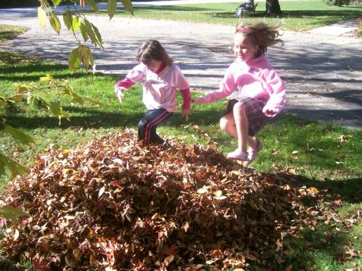 leaves 2008