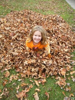 leaves 2010