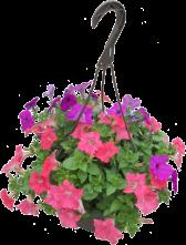 Petunia-Hanging-Basket