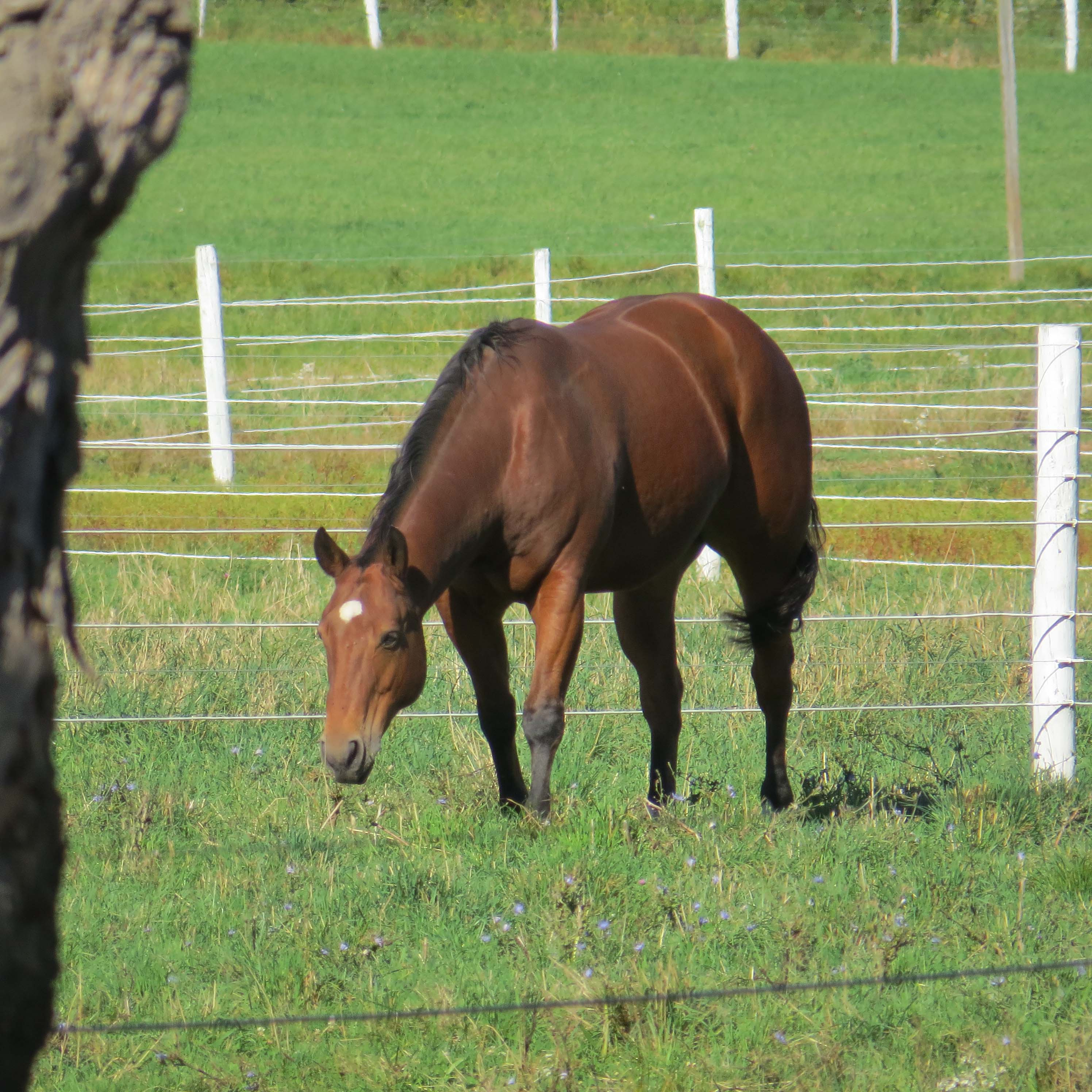 Download Wallpaper Horse Ipod Touch - img_0053  Perfect Image Reference_503377.jpg