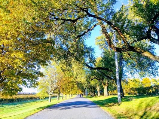 burnet road