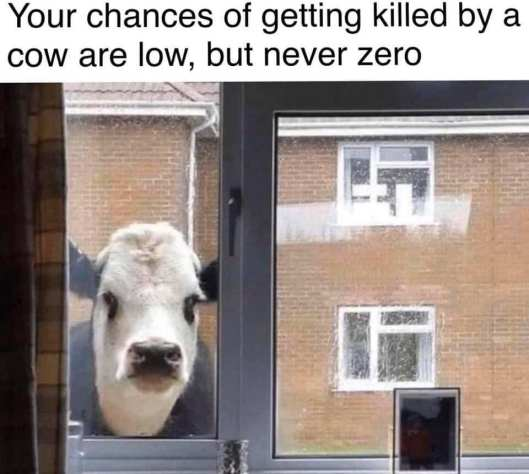 Friday Funny - cow