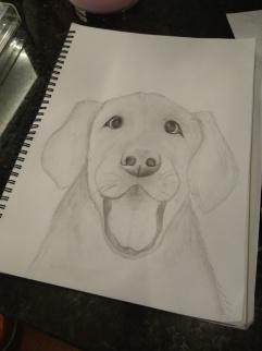 lauren drawing