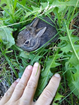 loving bunnies2