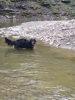 sam in creek