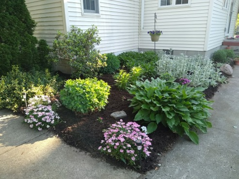 mulched beds