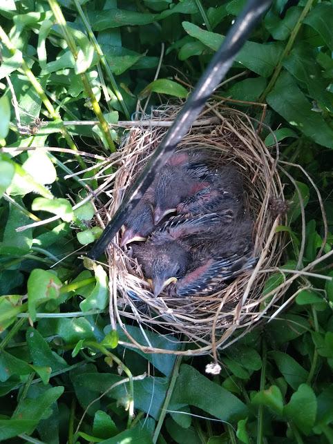 not loving - baby birds gone